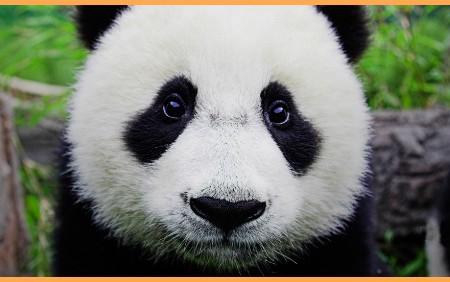 Waarom Thieme Niet Over De Panda's Moet Zeuren